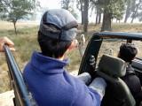 Langurs in Kanha