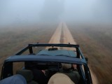 Foggy morning in the tiger reserve