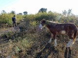 Local Dehradun horse path