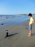 Goa beach puppy