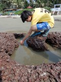 Goa tide pool