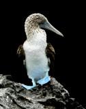 Birds of Galapagos