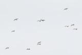 Cranes, Herons, Egrets and Other Shorebirds