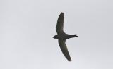 Common Swift????