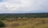Tarangire NP scenery