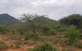 Mkomazi NP
