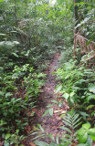 Trail at Khao Bahntad WS, Pattalung