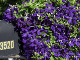 Purple Flowers Mailbox
