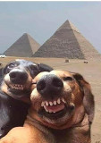 Our dogs on vacation