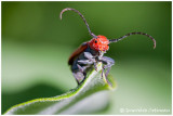 Insectes, araignées et autres bestioles