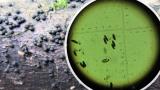 Rosellinia britannica on br-leaf wood NNotts 2020-5-14.png
