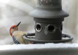 DSC01255DxO Red Bellied Woodpecker