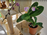 Orchid #2 Coming Into Bloom