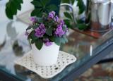DSC02001DxO African Violet