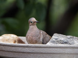 Birds (and occasional squirrels) - Mostly Through My Windows