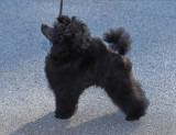 DSC02409DxO Toy Poodle