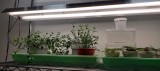 Bargain LED bulbs for plants