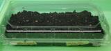 Calibrachoa from Pelleted Seed