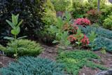 Untouched Milkweed Plants!