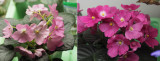Diary of an African Violet Leaf
