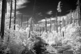 FOREST FIRE REMNANTS-IR