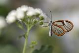 Papillons en liberté 2020