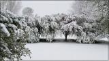 Late April Snow 2021