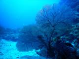 DivePNG Jun19 0008.jpg