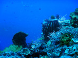DivePNG Jun19 0013.jpg
