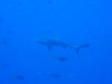DivePNG Jun19 0014.jpg