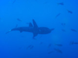 DivePNG Jun19 0028.jpg