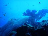DivePNG Jun19 0030.jpg