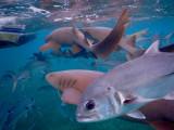 DiveBelize Nov19 0692.jpg