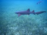 DiveBelize Nov19 0694.jpg