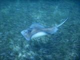 DiveBelize Nov19 0696.jpg
