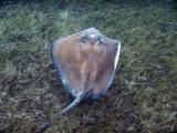 DiveBelize Nov19 0701.jpg