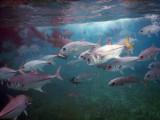 DiveBelize Nov19 0730.jpg