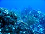DiveBelize Nov19 0772.jpg