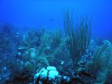 DiveBelize Nov19 0779.jpg