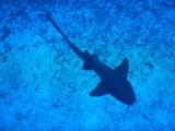 DiveBelize Nov19 0783.jpg
