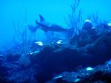 DiveBelize Nov19 0794.jpg