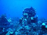 DiveBelize Nov19 0800.jpg