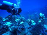 DiveBelize Nov19 0804.jpg