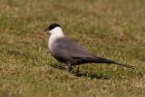 Western Palearctic Birds