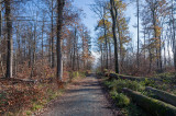 Taunus (Autumn 2020)