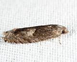 3246 - Shagbark Hickory Leafroller - Pseudexentera cressoniana
