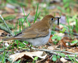 Old World Warblers, Thrushes and Allies
