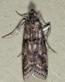 5771 - Salebriaria turpidella?