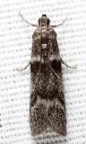 5718 - Myelopsis subtetricella