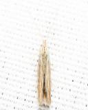 1365 - Streaked Coleophora - Coleophora cratipennella
